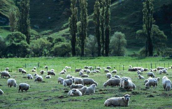 精美:澳大利亚自然风景图片