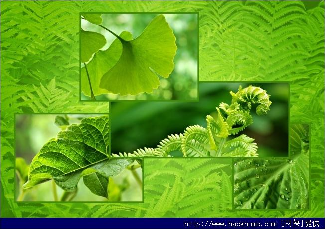 纯朴的大自然植物背景高清图片素材打包