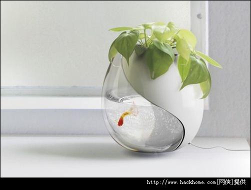 سبزه گندم روی تنگ ماهی 唯美图集:在水中游的鱼[多图] 第2页 - 美图美景 - 嗨客软件下载站