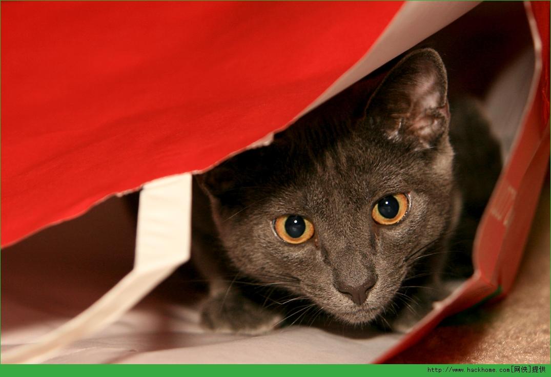 《win10猫咪主题包》里面包含一组很可爱的猫咪主题