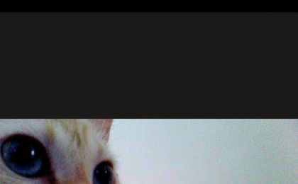 猫咪自拍APP图3