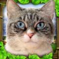 流浪猫模拟器免付费破解版 v2.1