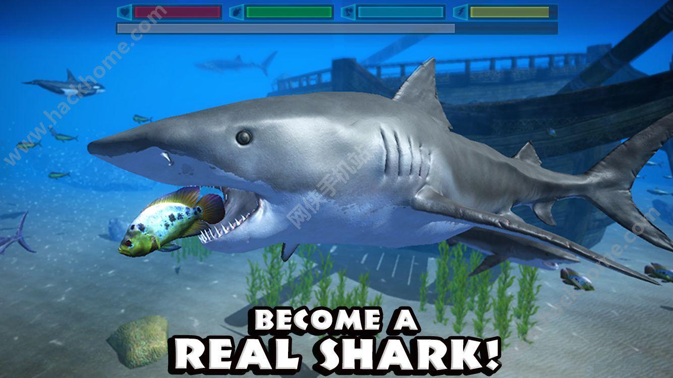 鲨鱼能那么凶猛是因为他们没有鱼鳔_励志故事_从容网