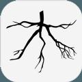 木branch