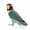 老鸟宝盒官方版