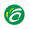 C之家app