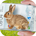 手机的小兔