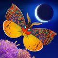 flutter starlight破解版