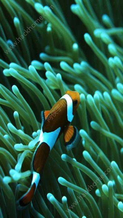 海洋动物拼图游戏ios版图4: