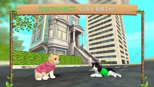 猫咪生存模拟器无限金币内购破解版(Cat Sim)图2: