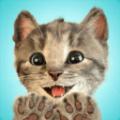Little Kitten我最喜爱的猫猫游戏安卓APP下载(Little Kitten) v1.0