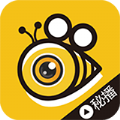 蜜蜂live直播