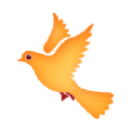 白鸽app