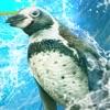 企鹅幻灯片赛车游戏最新安卓版下载 v1.0