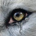 Wolf Online 2游戏官方安卓版 v1.0