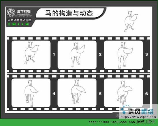 flash绘图技巧:四足动物运动规律之马的构造与动态