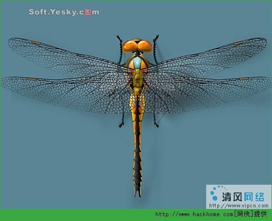 图解ps绘制美丽蜻蜓:头部